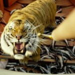 Tiger tiger burning bright in Life of Pi