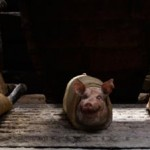 Pigs in a blanket with Ewan McGregor in Jack The Giant Slayer